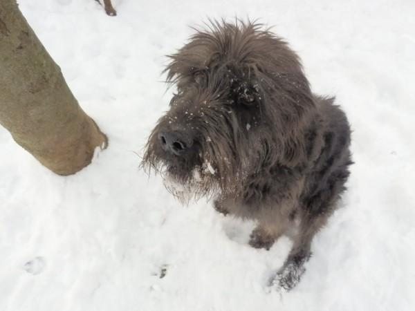 Johnny nella neve