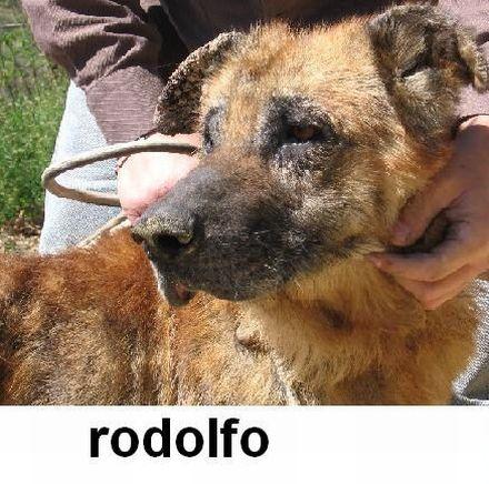 Rodolfo rogna