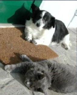 pulcio e il gatto
