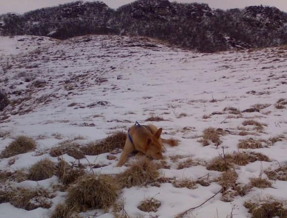 gringo nella neve
