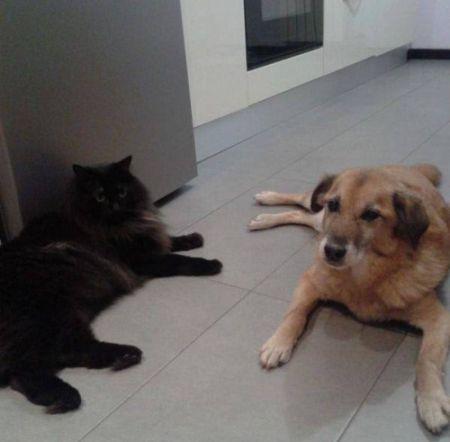 Jolly e il gatto Pasticcio