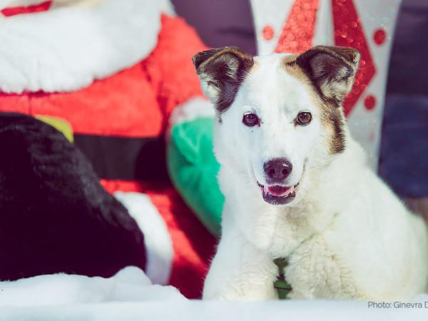 Un Natale speciale per la nostra Domitilla con il Calendario dell'Avvento Innovet
