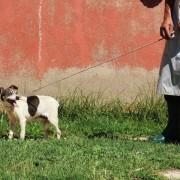 artemisia in canile